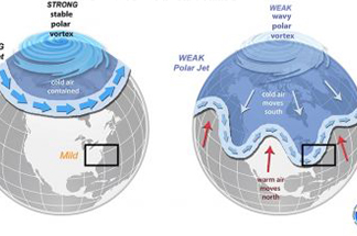 Global Patterns & Forecasts
